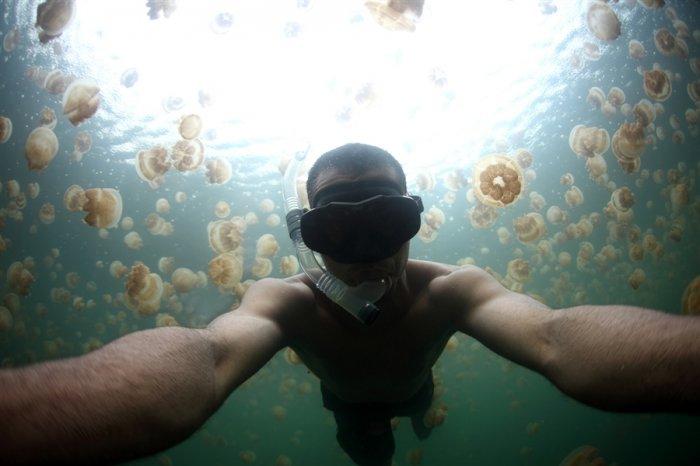 Купание среди медуз (5 фото)