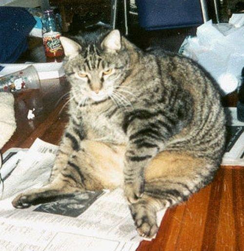 Толстые коты (48 фото)
