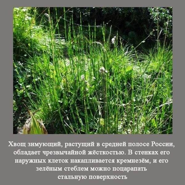 Любопытные факты о России (28 фото)