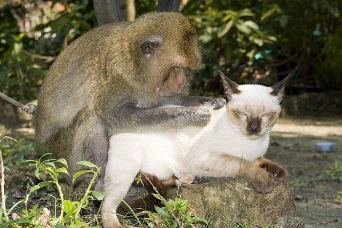 Дружба обезьянки и кошек (15 фото)