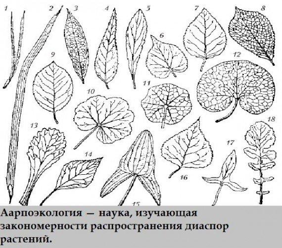 Интересные названия наук (16 фото)