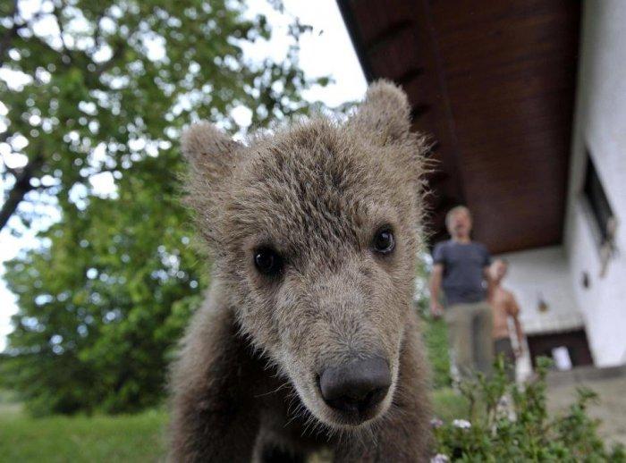 Медвежонок пришел в гости (5 фото)