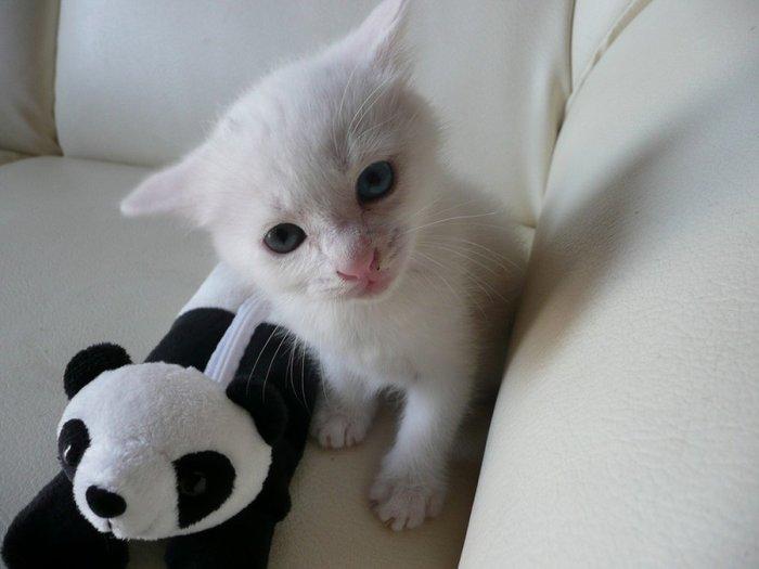 Забавные котята (61 фото)