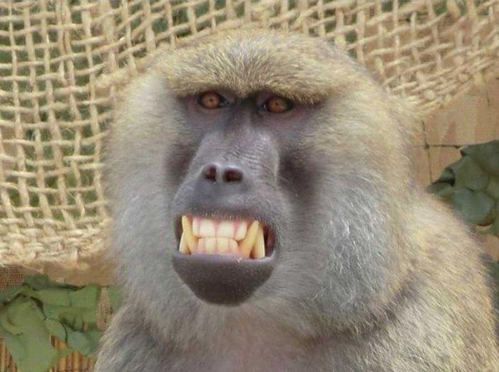 Фотография с обезьянкой (4 фото)