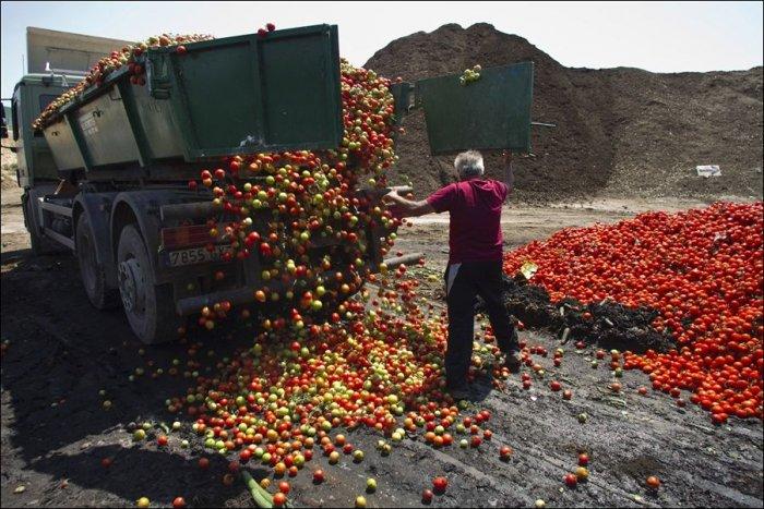 Уничтожение овощей в Европе (6 фото)